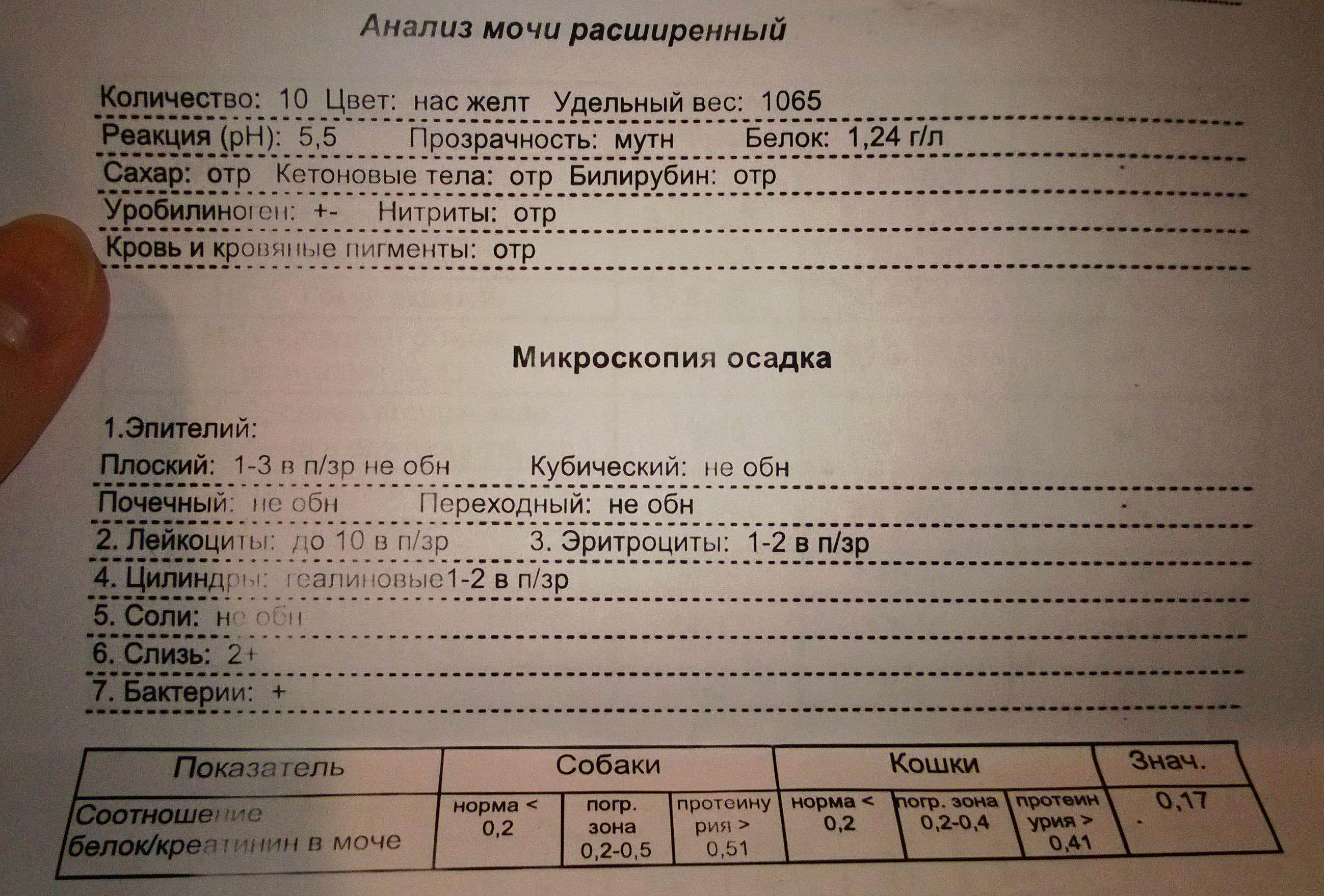 Оам расшифровка норма у беременных таблица