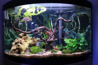 Первые шаги аквариумиста