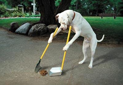Собака-дворник