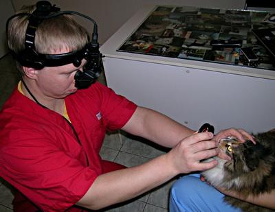 Рис 6б. Непрямая офтальмоскопия (бинокулярный налобный офтальмосокоп)